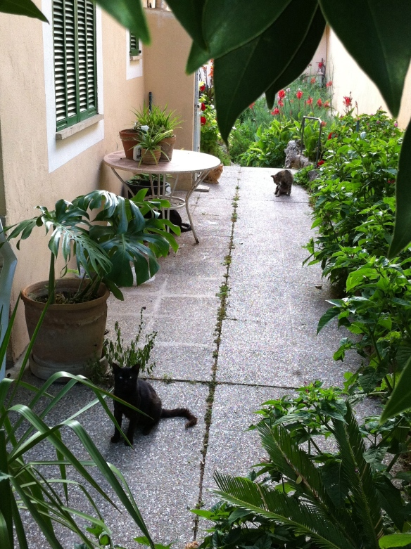 Mallorca's mascot, the stray kitty cat (how many can you count in this picture?)